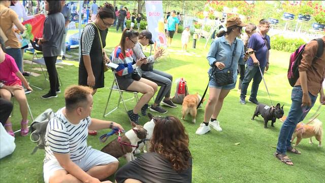 Pet Week-End ngày hội thú cưng không nên bỏ lỡ